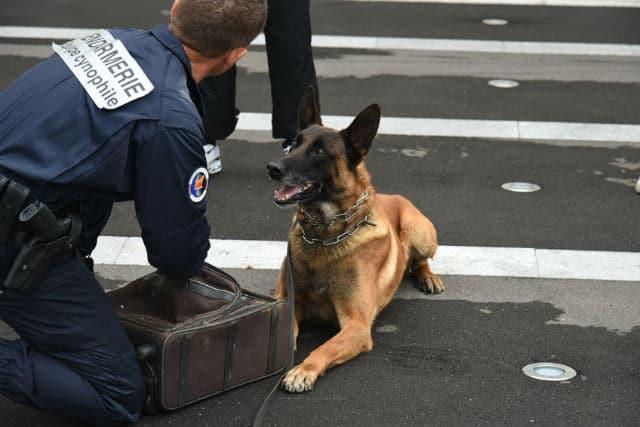 Chien de la Gendarmerie