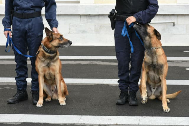 Maitres chien de la Gendarmerie