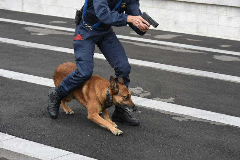 Maitre Chien Police Nationale
